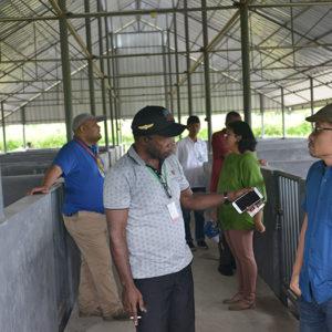 Tim Sekretaris EKsekutif ketika mengunjungi fasilitas pembibitan ternak babi di Kilo 8 Jalan poros Timika Mapurujaya. (LPMAK/MISKAN)